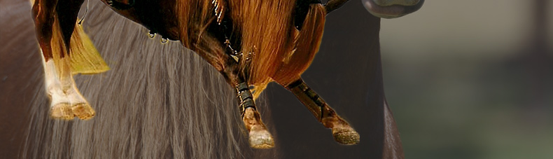 how to train miniature horses for tricks